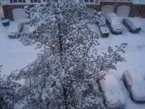 snow32009-1